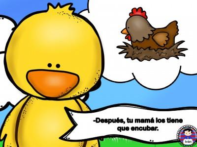 El-pollito-Pipo.-015