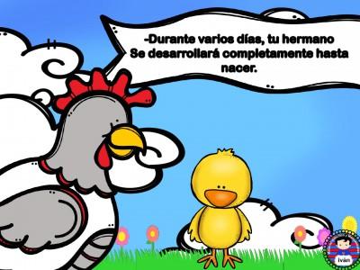 El-pollito-Pipo.-016
