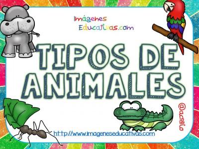 Tipos de animales claseficación (1)