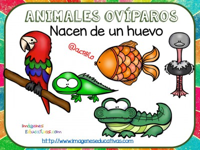 Tipos De Animales Tarjetas Explicativas Clasificación Imagenes