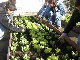 Huerto urbano y escolar 20 imagenes educativas for Materiales para la construccion de un vivero