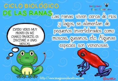 Ciclo biológico de las ranas para niños (7)