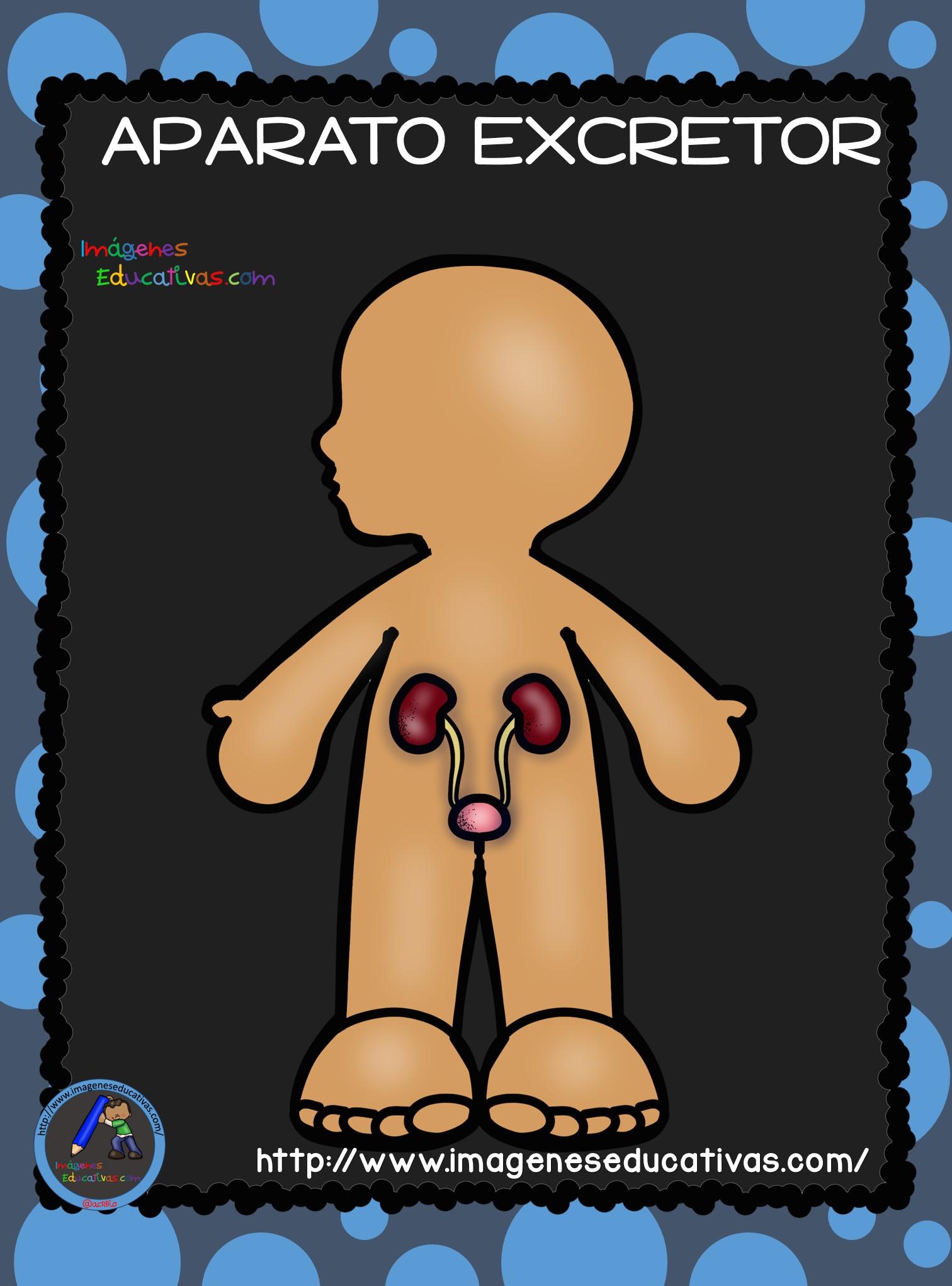 El Cuerpo Humano; Aparatos y Sistemas para Primaria (12