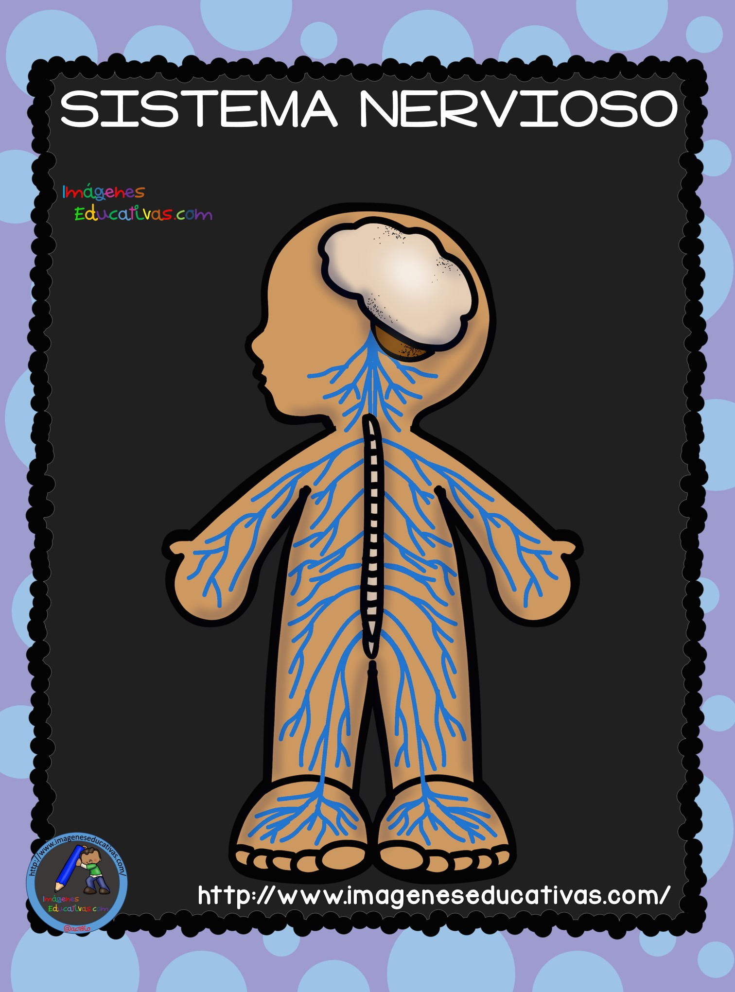 El Cuerpo Humano; Aparatos y Sistemas para Primaria - Imagenes ...