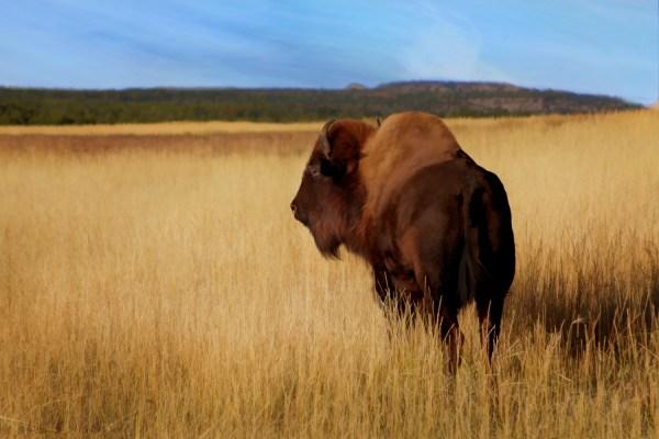 Photography – Buffalo
