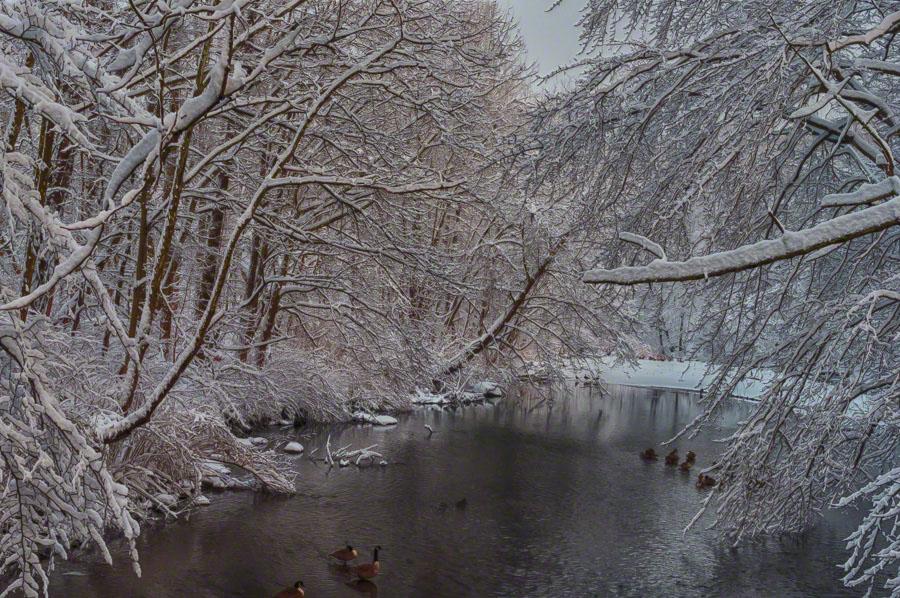 whippany, river, nj, winter