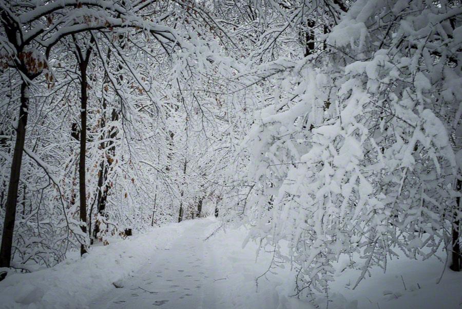 winter in nj, snow