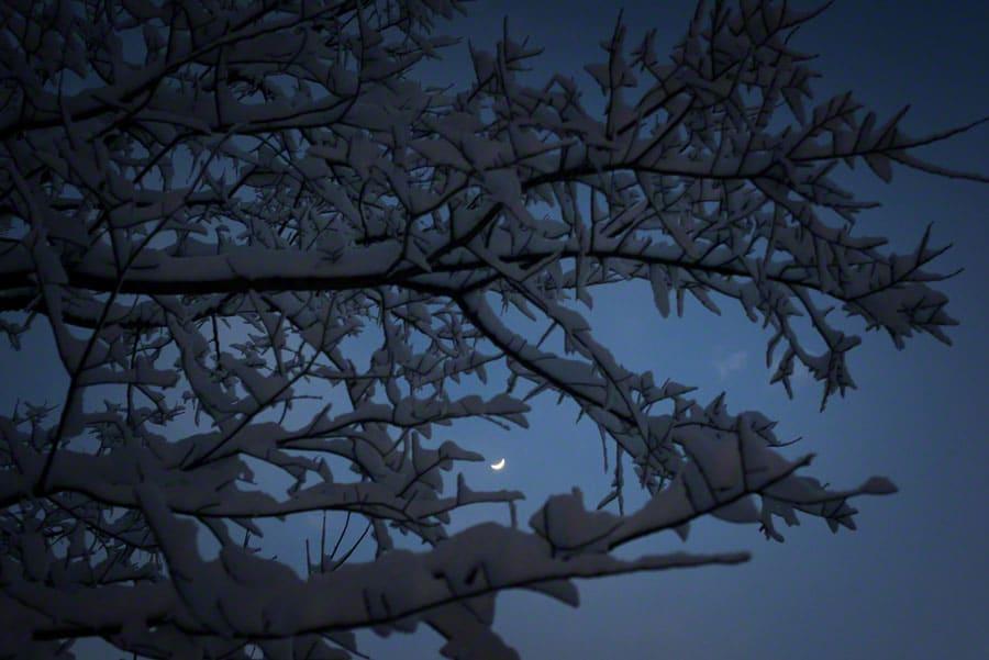 moon, snow, tree, night