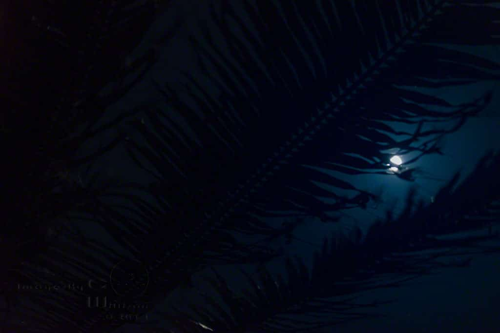 moon, palm, tree, blue