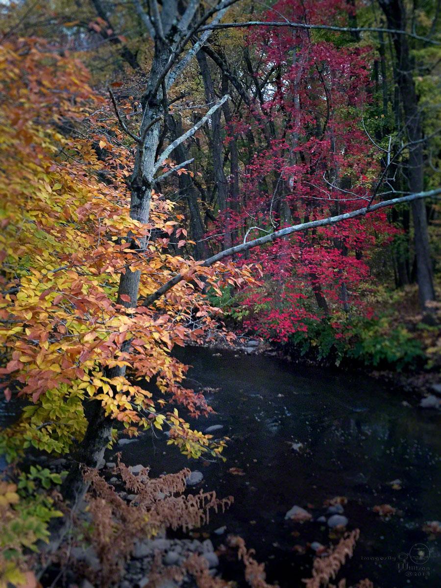 autumn, fall, colors