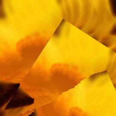 Daffodil abstract