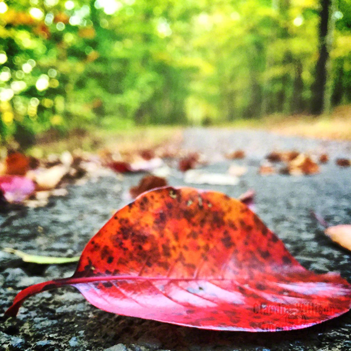 red, leaf, fall, iphone