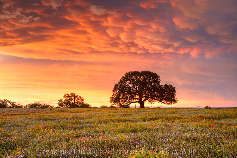 Labs In The Fall Desktop Wallpapers Good Texas Landscape Photography Rob Greebon Photo Blog
