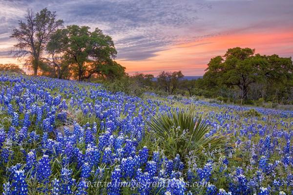 colors of bluebonnet sunset 1