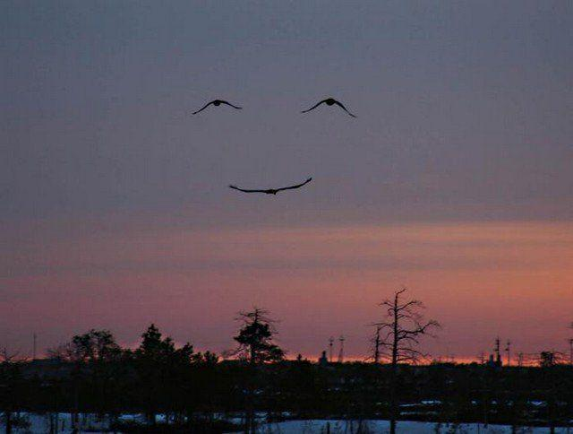 An example of pareidolia, this photo depicts three birds in flight, which appear in the pattern of a smiling face.