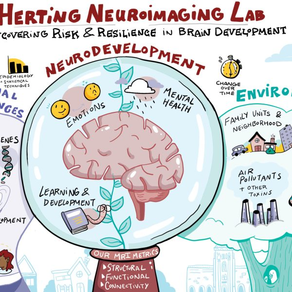 imagethink-infographic-herting-lab-neuroimaging-illustration