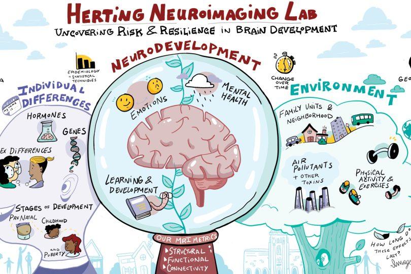 imagethink-infographic-herting-lab-neuroimaging-illustration