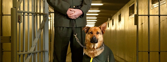 Image Workshop, location portraits of prison drug detection dog and handling officer