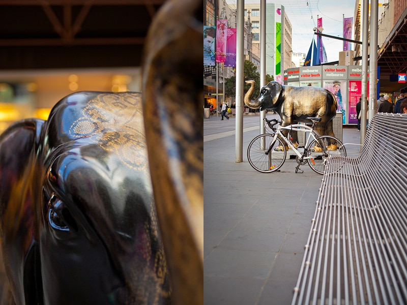 Art photography - Elephant hunting with Melbourne zoo Mali in the city