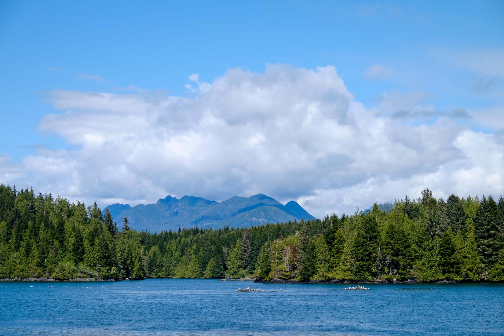 PWS015-0678-Sharon-Blance-photographer-Tofino-travel-editorial-landscape-water-trees
