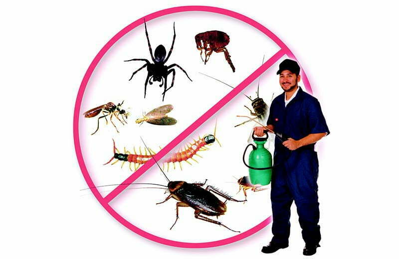 pest_control_fumigation