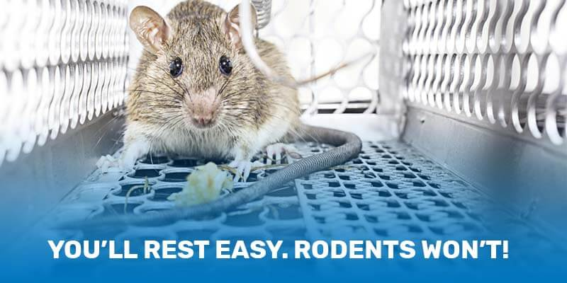 rodent-control-rest-easy