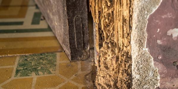 pre-construction-termite-treatment-3