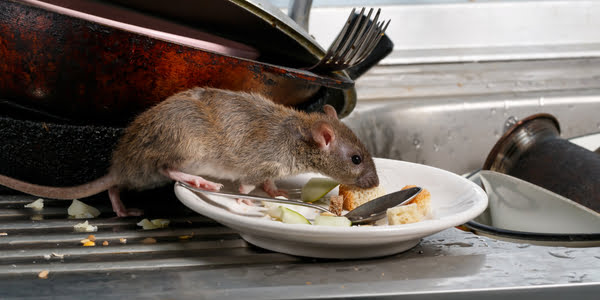 clean-get-rid-of-rodents