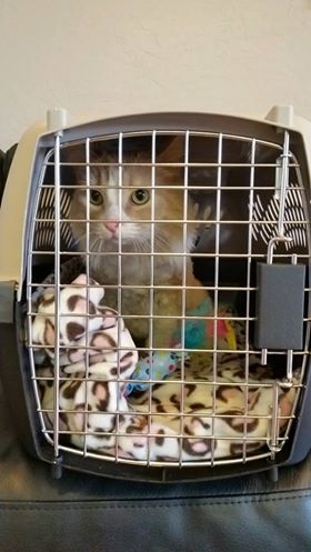Less than happy about being in a carrier.