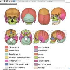 Human Skull Diagram Superior Reverse Work Light Wiring Anatomical Illustrations