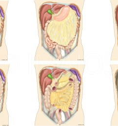 peritoneal cavity root of mesentery mesocolon lesser omentum greater omentum omental [ 2560 x 1440 Pixel ]