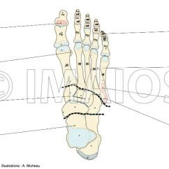 Medial Lower Leg Muscles Diagram Bohr Of Iodine Anatomy Extremity Dorsum Foot Bones Skeletal System Joints