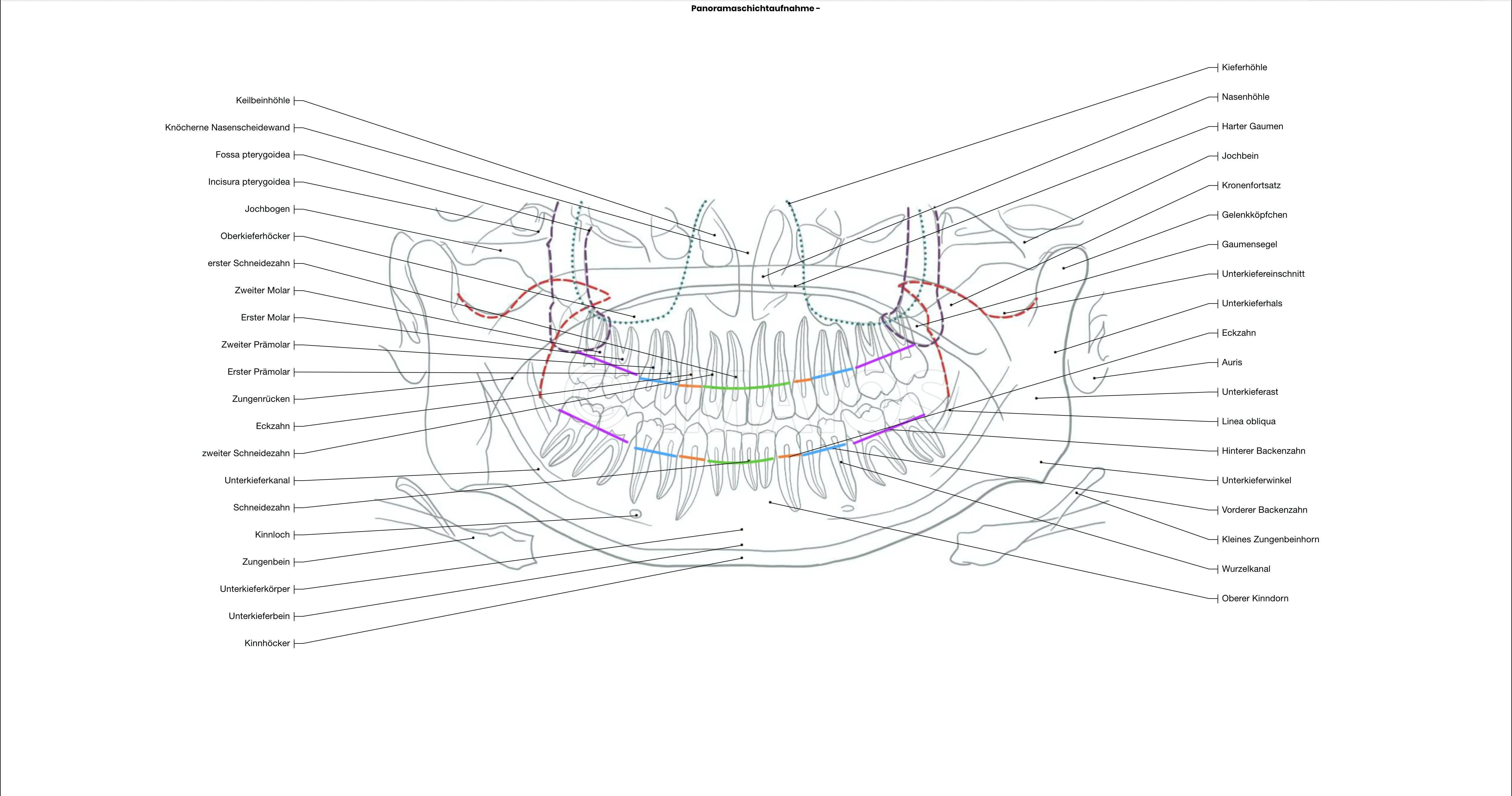 Zähne: Anatomische Abbildungen