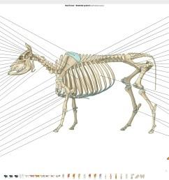 bull cow osteology [ 5114 x 2870 Pixel ]