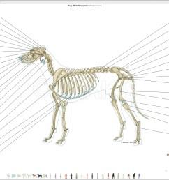 labeled atlas of anatomy illustrations of the dog bones skeletal system [ 2560 x 1440 Pixel ]