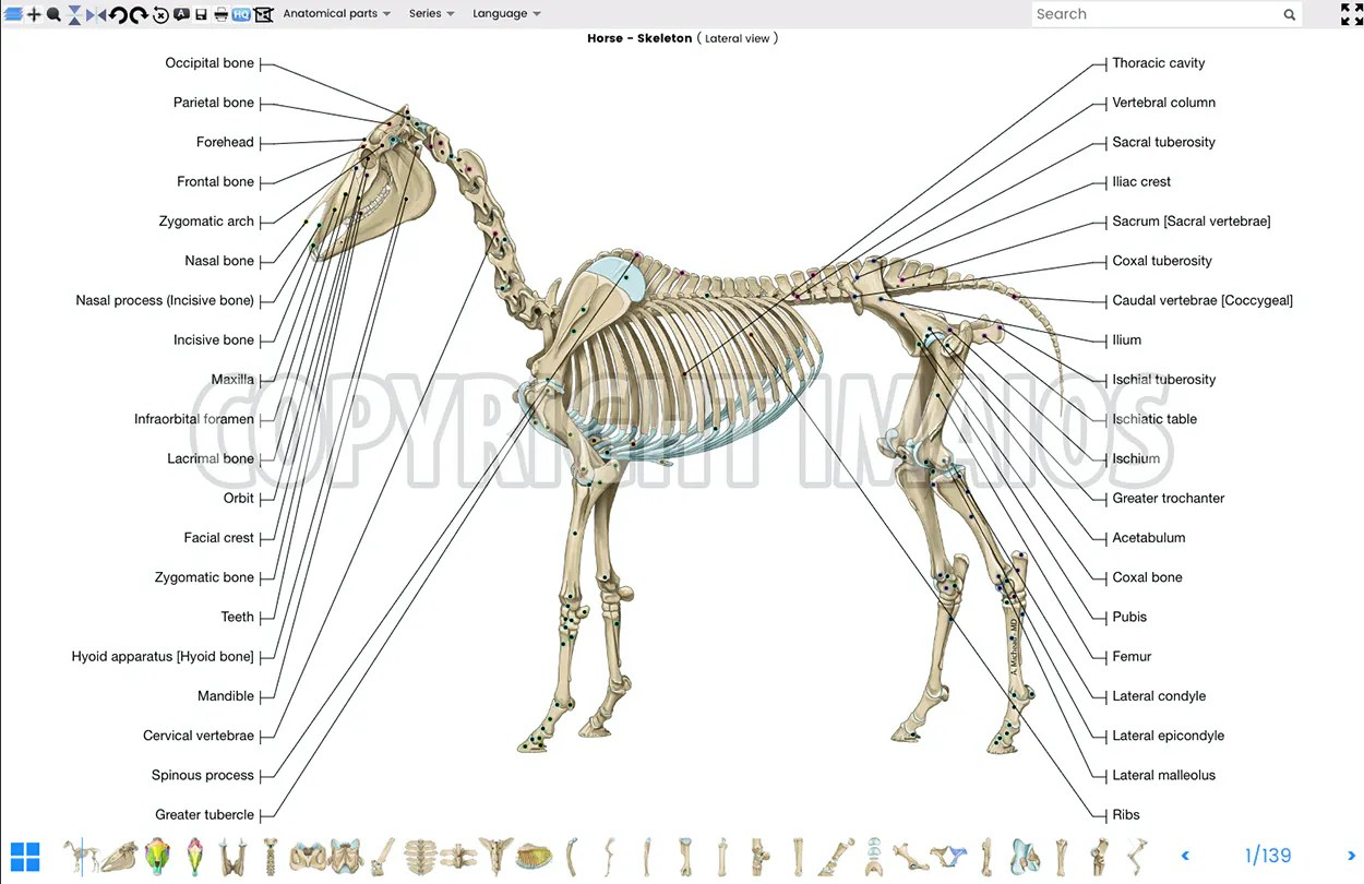 hight resolution of vet anatomy atlas of equine anatomy osteology of the horse skeleton