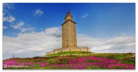 Faros de Galicia Torre de Hércules Océano Atlántico Primavera Flores Uñas de Gato Naturaleza Decoración