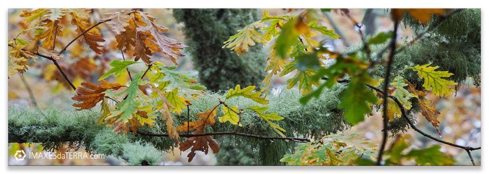 Comprar fotografía paisajes de Galicia Carballos Parque Natural do Invernadeiro Ourense Decoración