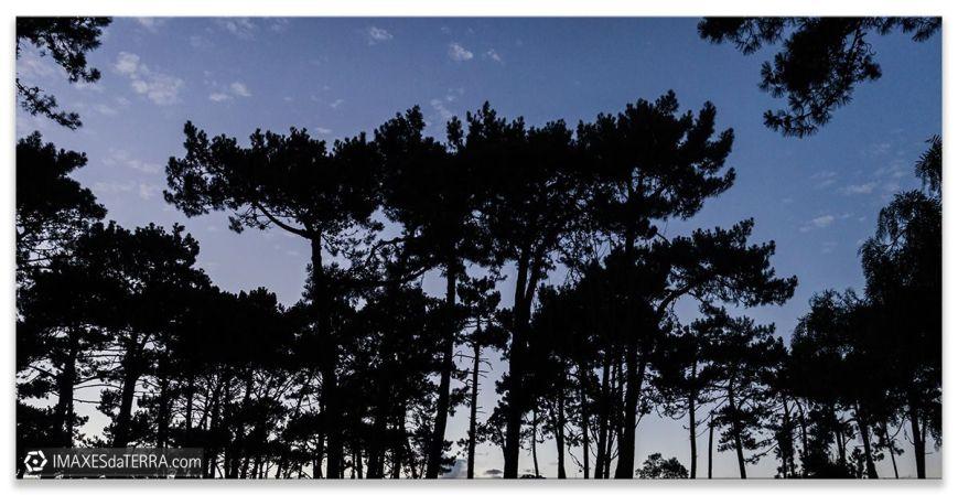 Pinos de Galicia, Comprar fotografía Galicia Pinos Puesta de Sol Naturaleza Gallega Decoración Paisajes