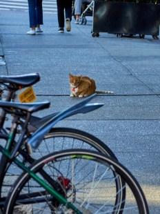 Thursday -bodega cat