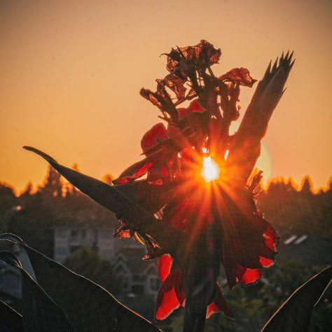 flower and sunset copy