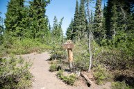 Trail Junction