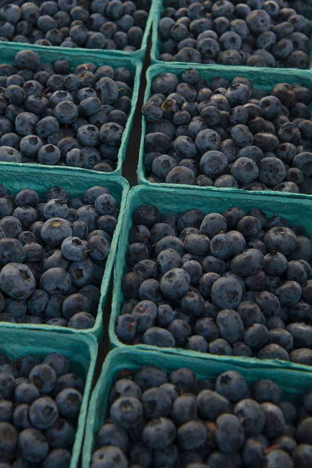 pBlueberries-size1