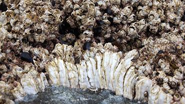 Marine biological fouling
