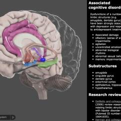 Internal Brain Diagram Logic Gates Timing 3d Iphone And Ipad Medical App Review