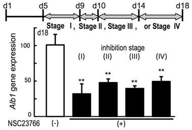 A synthetic nanofibrillar matrix promotes in vitro hepatic