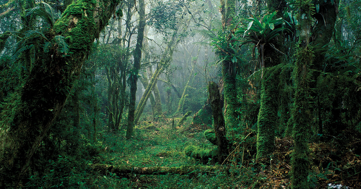Forests for Growth  Finance  Development March 2017