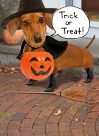 Happy Halloween Weiner Dog Halloween Card | Cardstore