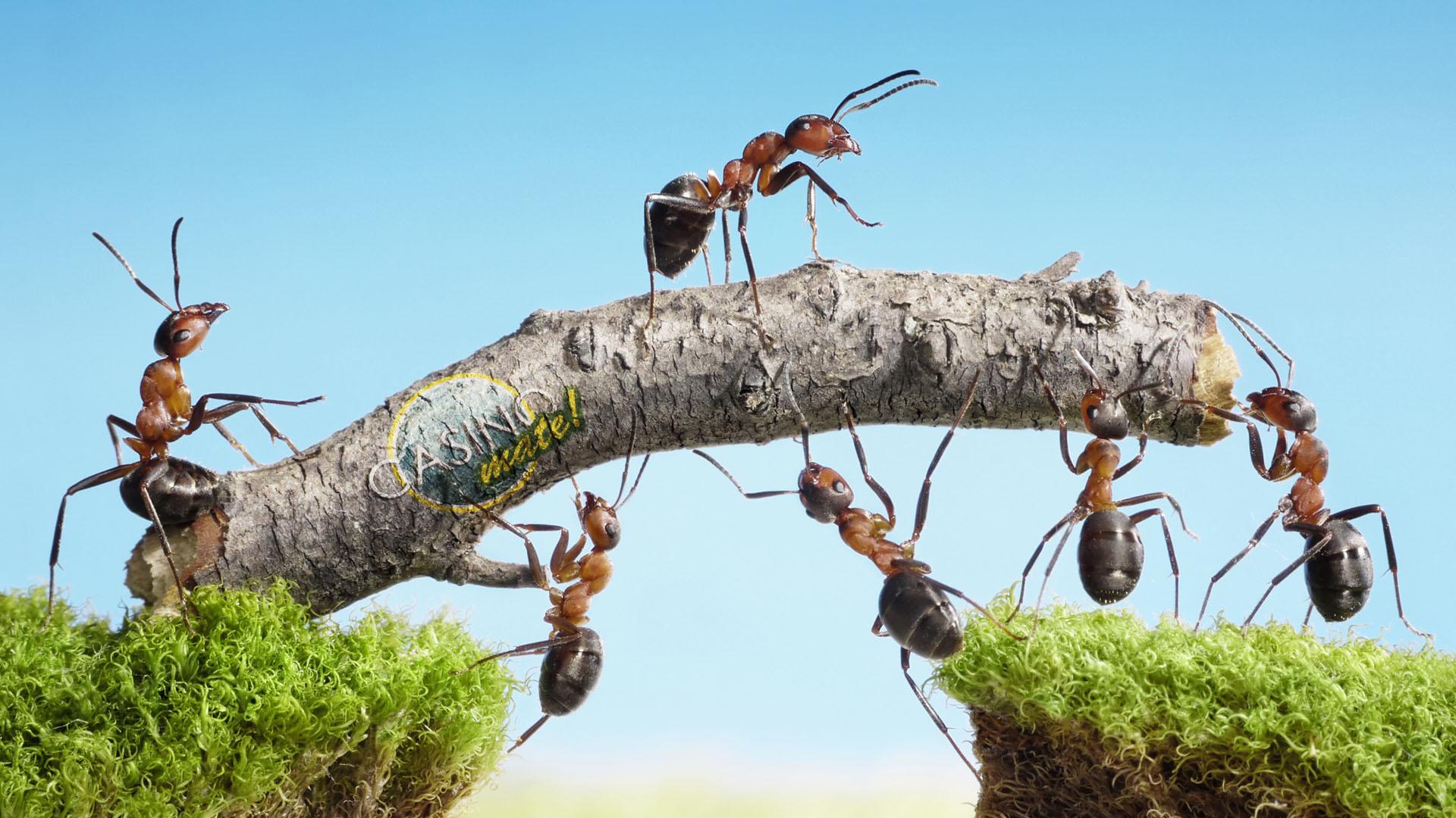 Slikovni rezultat za ants communication