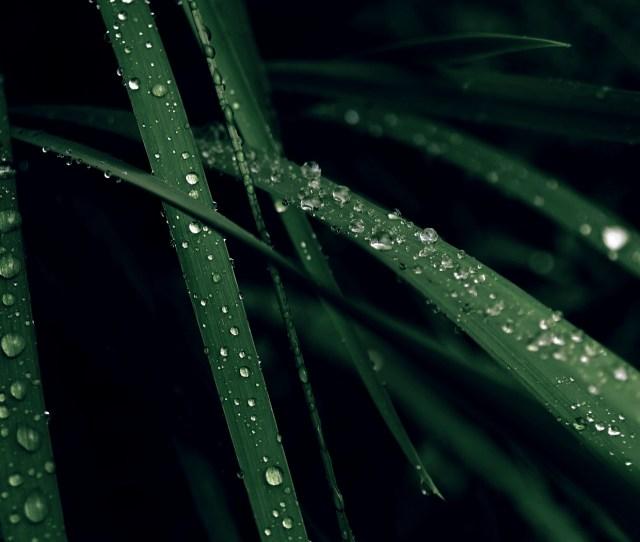 Wet Grass Wallpaper